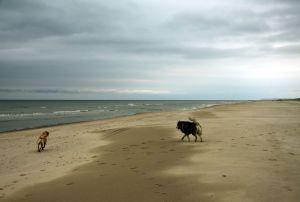 Lasko und Shinouk am Strand