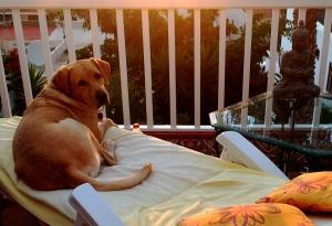 Lasko denkt in der Sonne