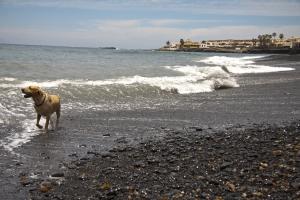 Lasko denkt am Strand