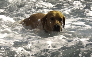 Lasko schwimmt