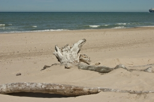 Holz am Strand