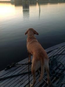 Lasko denkt auf dem Boot