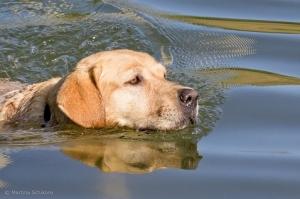 morgendliches Wellness schwimmen