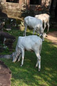 Rast in Siem Reap
