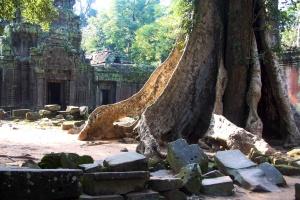 Natur - große Bäume, alte Mauern