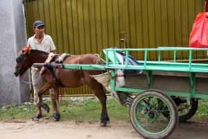 Pferdekarren wartet auf Touristen