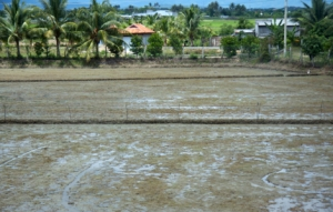 Blick aus dem Busfenster - abgeerntetes Reisfeld