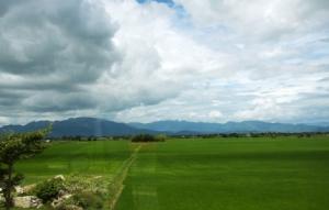 Blick aus dem Busfenster - weite grüne Reisfelder