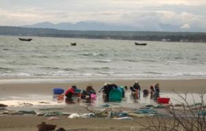 Mui Ne - Fisch wird am Strand gesäubert