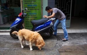 Nachbars Hund frisst Reis