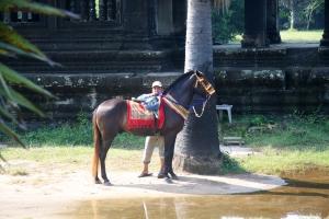 Pferd in Angkor Wat