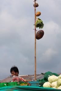 Früchte am Mast der Schiffe