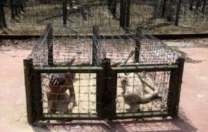 Coconut Prison - Phu Quoc - tiger cages