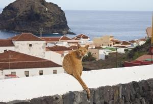 Katze in Garachico