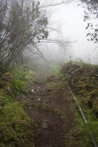 Nebel im Gespensterwald