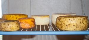 hausgemachter Käse