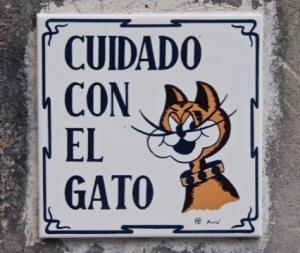 und auch Katzen gibt es auf der Insel