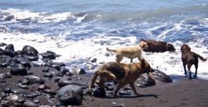 Badefreude am Hundestrand