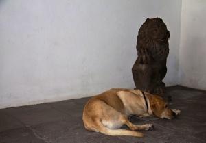 Lasko schläft - bewacht von einem Löwen