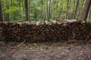 aufgestapeltes Holz vom letzten Sturm