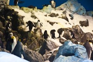Welt der Antarktis im Loropark auf Teneriffa