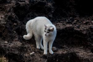 Weiße Katze - sieht Lasko :-)