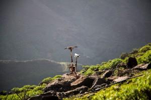 Heim- oder Bergtrainer?