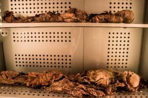 Museo de la Naturaleza y el Hombre - Guanachen Mumien