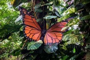 Museo de la Naturaleza y el Hombre - Schmetterling