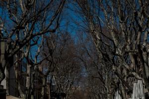 La Rambla - Bäume