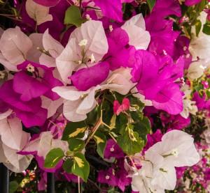 Blumen, Blüten und Balkonien