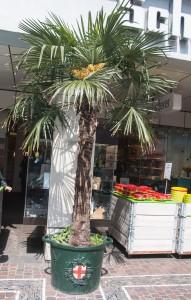 Städtische Palmen
