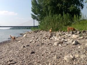 Lasko vergnügt sich mit seinen Kumpels am Rhein