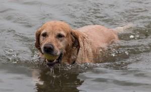 Bälle aus dem Rhein fischen - ein Spaß ohne Ende