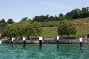 Weinreben am Ufer