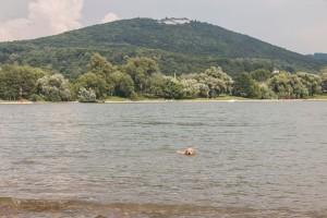 Schwimmen vor dem Petersberg
