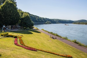 Grünes Rheinufer