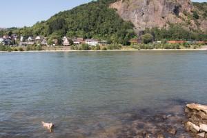 Lasko badet auch in Remagen