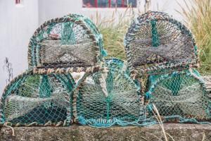 Fischerreusen