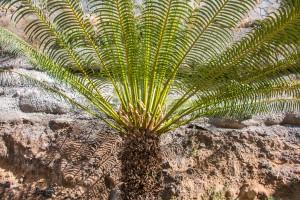 Palmen und Felsen