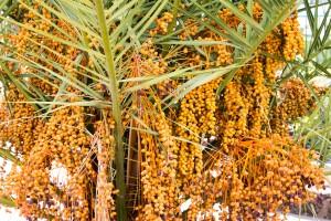Palmen und Früchte