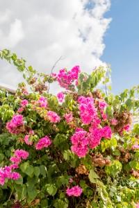 Sonne und Blumen