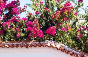 Farbenprächtige Blüten
