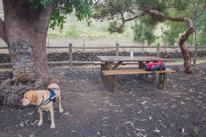 erste Rast mit viel Wasser für Lasko in Santiago del Teide
