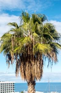 """vor dem Besuch des """"Palmenfriseurs"""""""