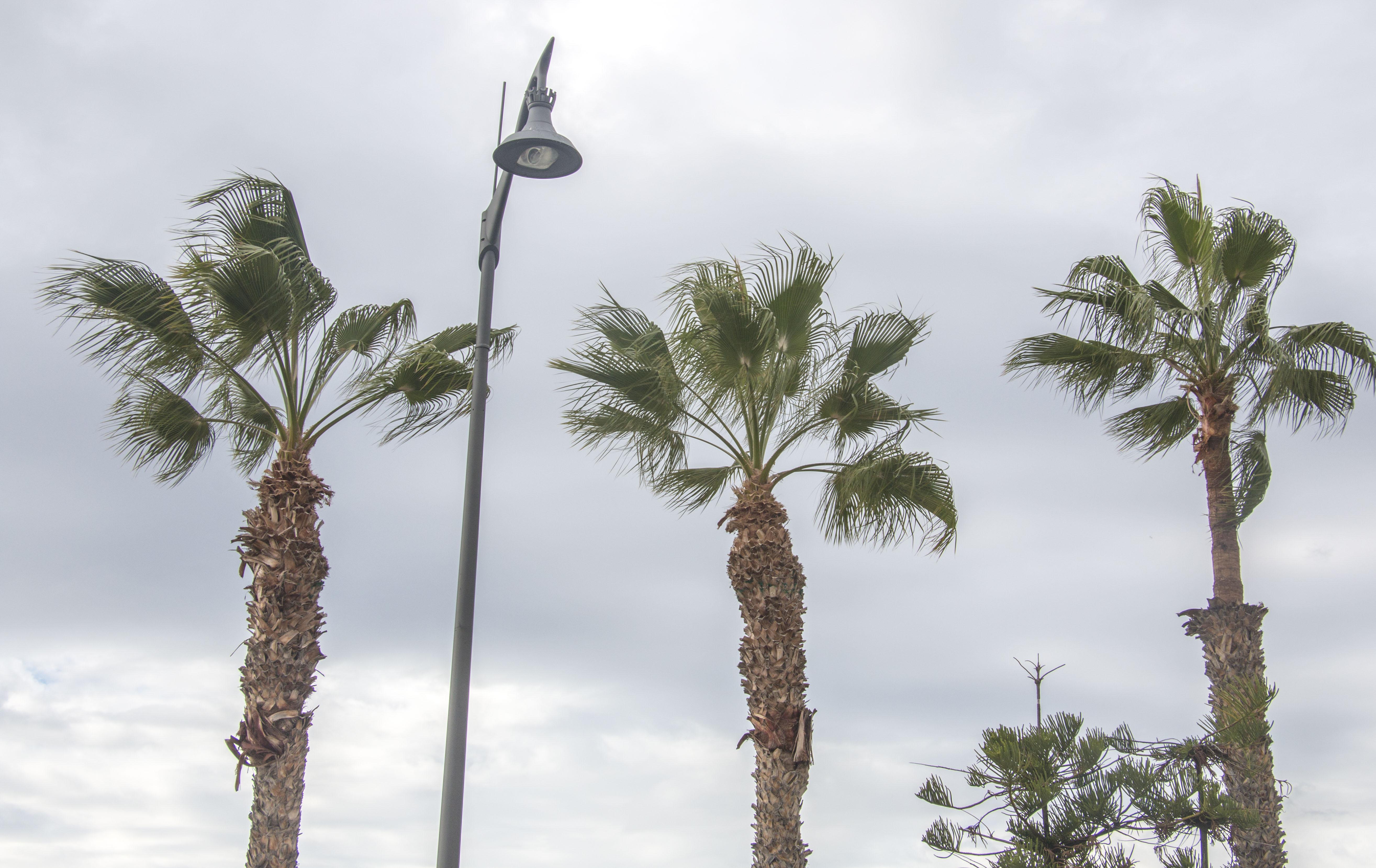 Auch Palmen Mussen Ab Und Zu Zum Friseur Leonies Leben