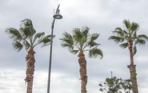 das Wetter wechselt, aber die neue Palmenfrisur steht :-)