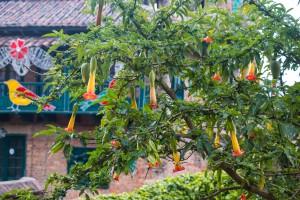 Trompetenbaum mit höchst giftigen Blüten