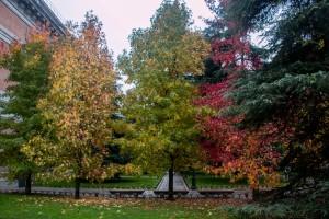 Herbstlaub im Garten des Museo del Prado