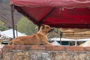 Villa de Leyva - auch hier viele Straßenhunde